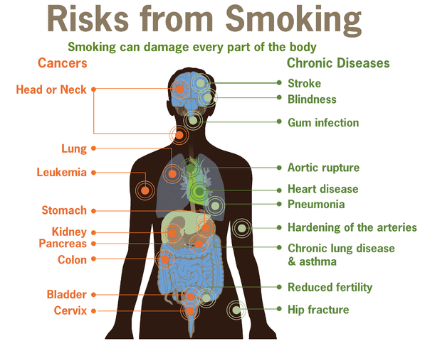 Effects of smoking on the body essays on friendship Shoebox Be Gone Contest Entry     for Write a short text essay          words